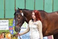 Výstava koní Turany 2014